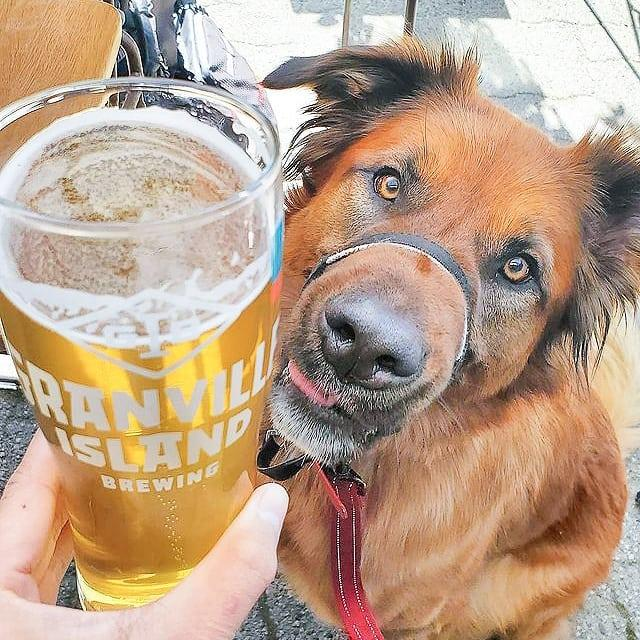 We want to introduce you to Bronx. The look on his face? The same one we have just before we're about to enjoy one of our cold brews. 🍻 🐶 . . . 📸 : @t